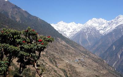 The Langtang Rhododendrons Trek